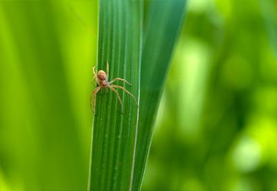 spider, arachnid, pest